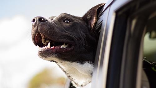 dog_in_car_small.jpg