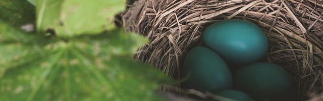 nest_turquois_eggs_ebook landing page.jpg